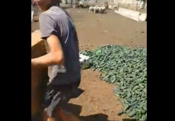 Українські фермери викидають урожай огірків: на ринку по гривні брати не захотіли