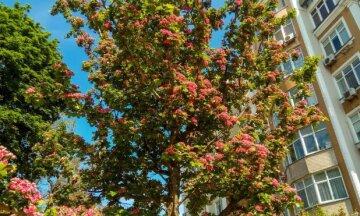 Редкие растения зацвели в Одессе: фото восхитительной красоты