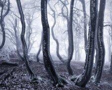 pejzazhnye-snimki-zasnezhennyx-gornyx-lesov-evropy-4