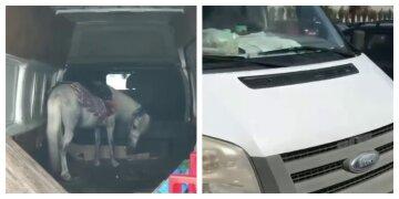 """""""Водія немає, машина закрита"""": поні залишили в замкненому автомобілі на спеці, фото"""