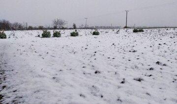 Снег укрыл Одесскую область в последний день марта: удивительные кадры