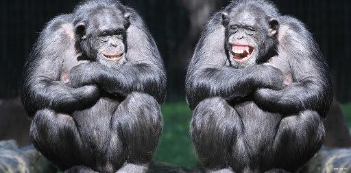 Сміх – найкращий початок дня: відбірні анекдоти 20 травня