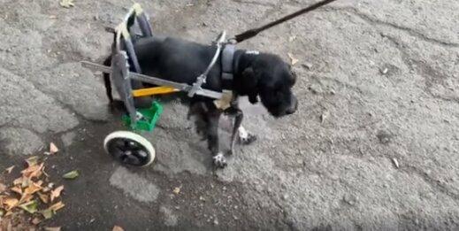 Под Днепром ветеринары спасли собаку, которую хозяева принесли на усыпление: трогательные кадры
