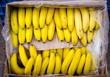 """Опасные бананы завезли в Одесскую область, фото: """"на 200 миллионов..."""""""