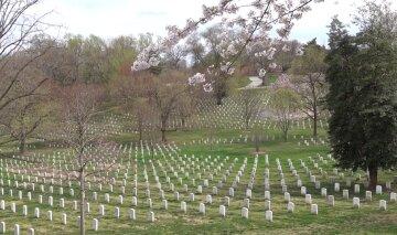 По примеру США: под Киевом появится Национальное военное кладбище, подробности