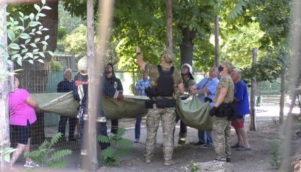 Обезьяны устроили небывалый переполох в Одессе, съехались полиция и спасатели: появилось видео