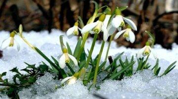 подснежники, цветы, весна, природа