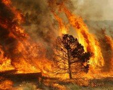 лес, пожар