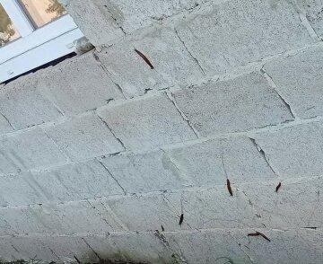 """Паразити влаштували масову атаку на будинки українців, люди у відчаї: """"Відрами збирають"""""""