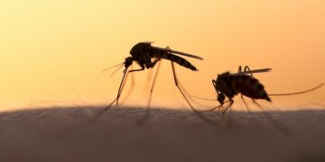 Заборонили комарів: влада прийняла найбезглуздіше рішення