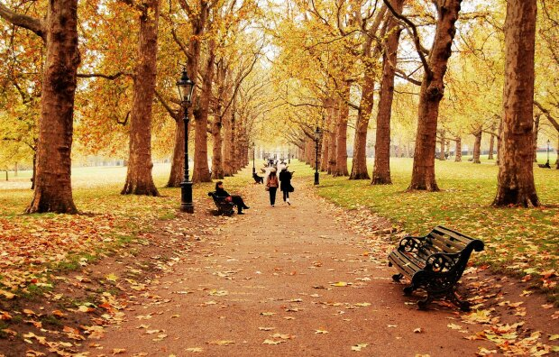 осень, люди, женщина