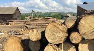"""ГБР разоблачило топ-чиновников на вырубке леса: """"миллионные убытки"""", что ждет нарушителей"""