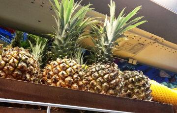 """""""Приехали с ананасами"""": опасные существа хлынули в Днепр, пугающие фото"""