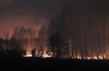 Украинские леса затянуло едким дымом, стянуты силы для борьбы с пожаром: детали ЧП