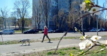 весна погода прогулка выгул собак