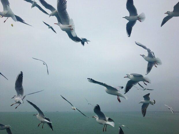 Крым, чайки