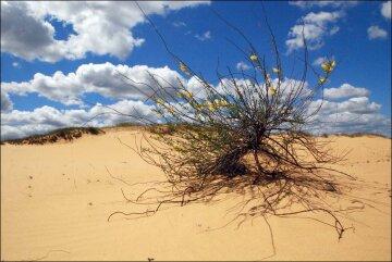 пустыня, засуха, экологическая катастрофа, глобальное потепление