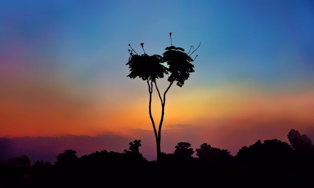 лес, природа, дерево