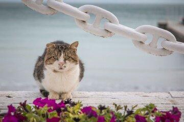 Де провести відпустку: чим українців заманюють пляжі Одеси