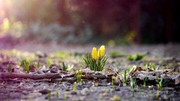 Погода во Львове: чего ждать на выходных