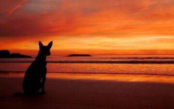 закат пляж море собака