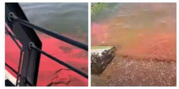 "В Азовське море потрапила токсична фарба, кадри: ""береги усіяні рибою"""