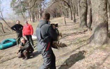 Неделю была на льдине без еды: спасатели бросились на помощь собаке, но возникли трудности, фото