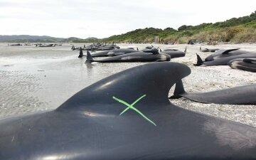 самоубийство китов