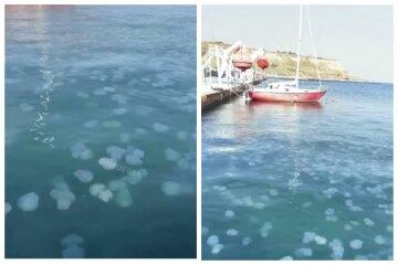 Стаи медуз оккупировали море в Одессе, распугав отдыхающих: нашествие показали на видео
