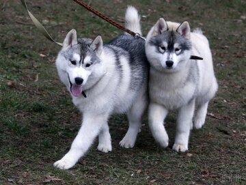 собака УНИАН