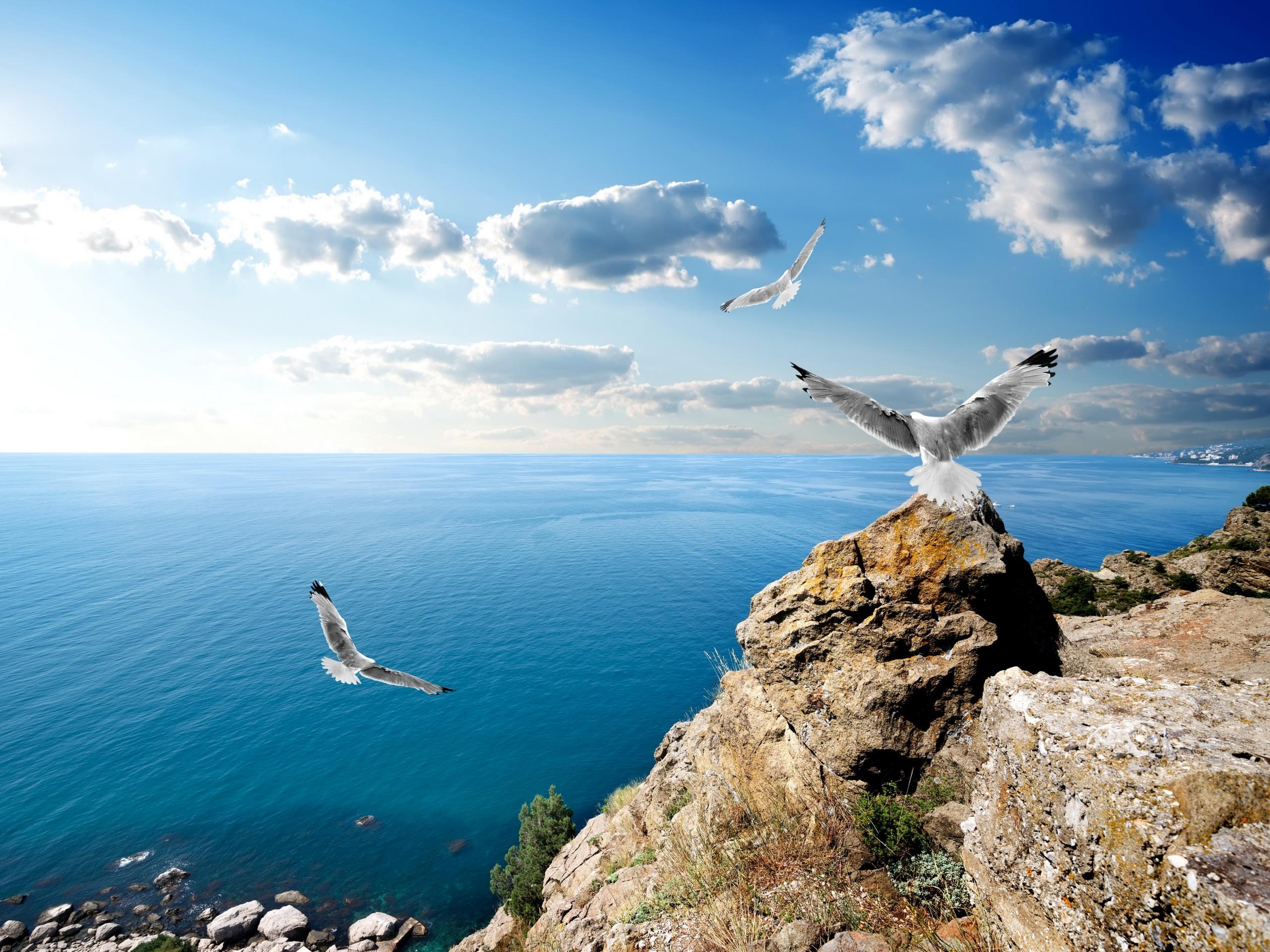 фото морская чайка в полете высокого качества очень дорого, начала
