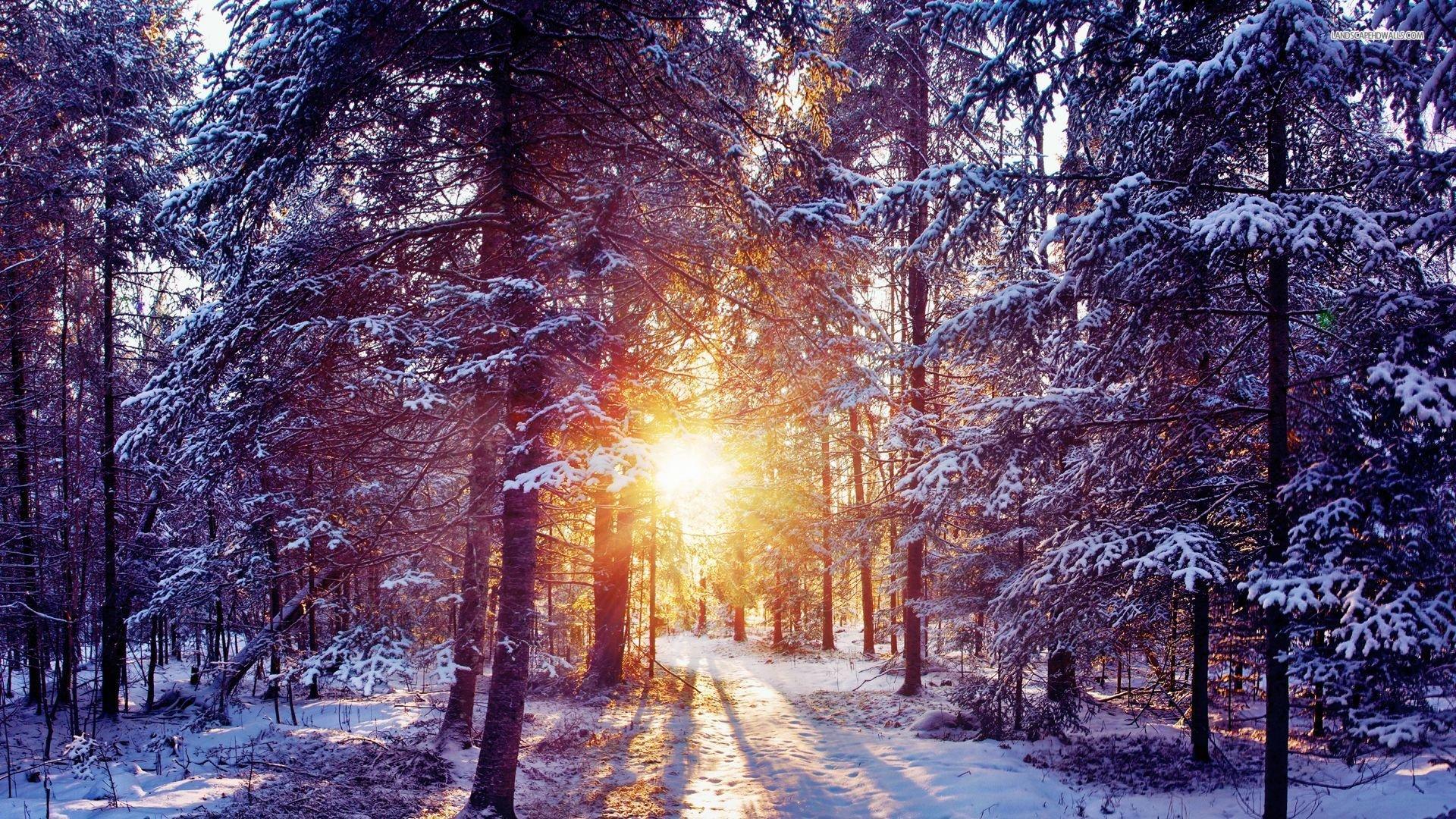 Картинки природа зима в лесу