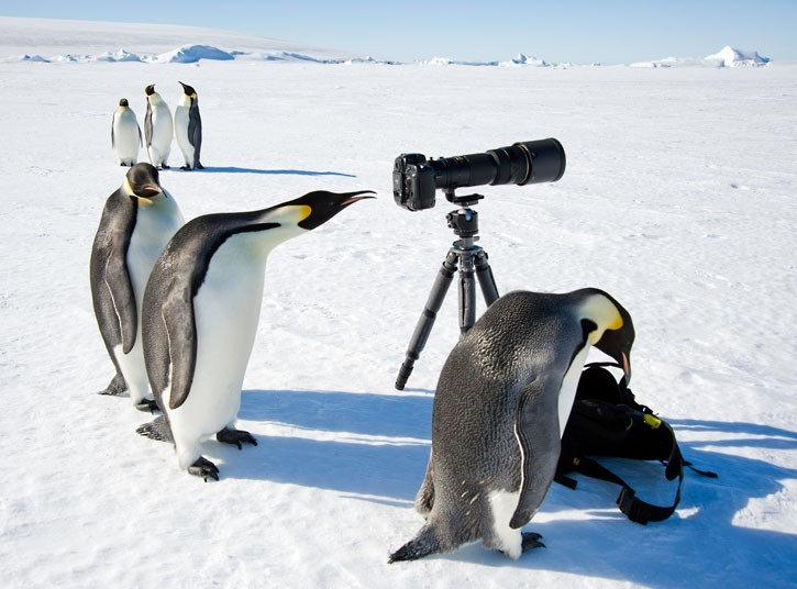 вырезать пингвины прикол фото это