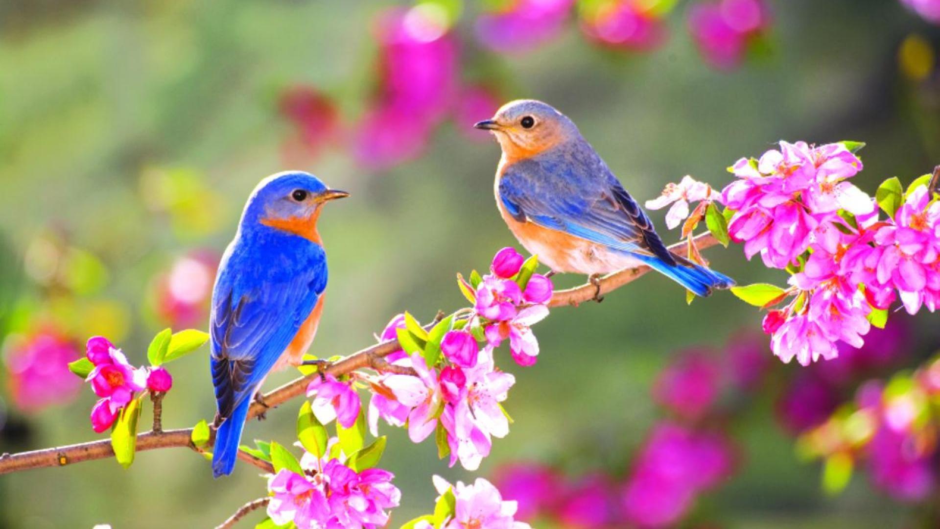 Обои На Телефон Птицы