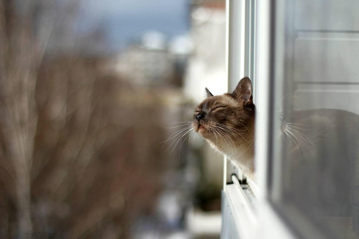 из окна