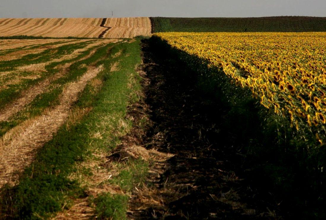 земельный кодекс сельскохозяйственные земли